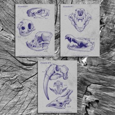 Planches Anatomiques (1/2/3)